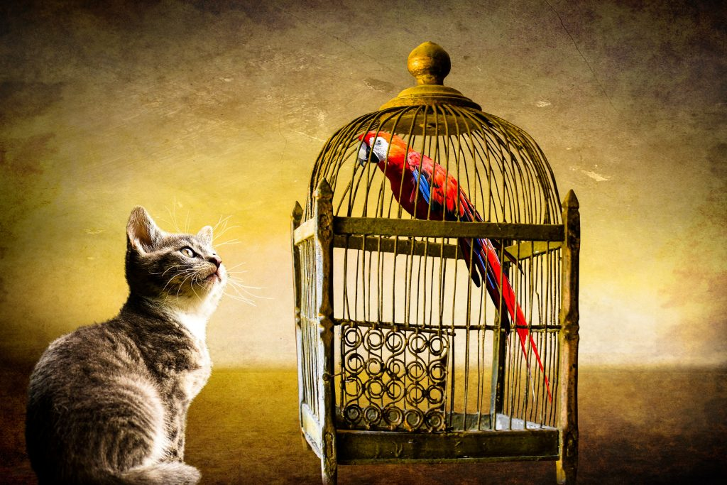 Cat listening attentively to a parrot's story